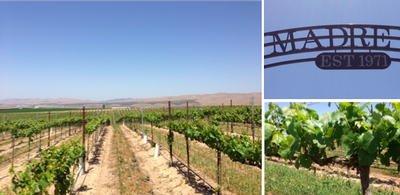 SIERRA MADRE VINEYARD (Santa Maria Valley)